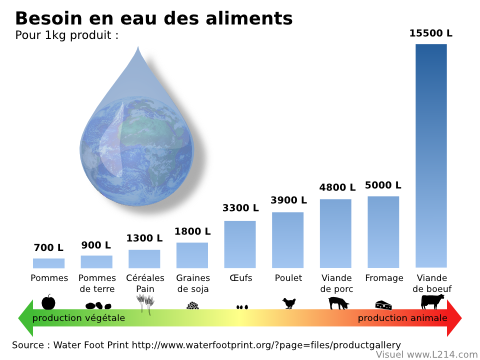 eau-fonction-aliments-480x360
